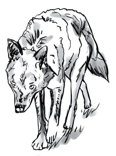 Lobo 7