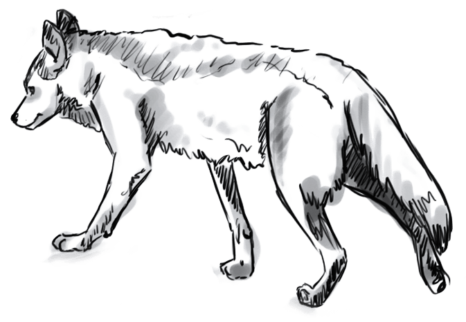 Lobo 8