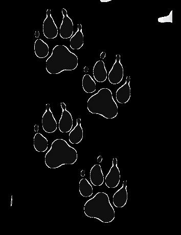 Lobo 9
