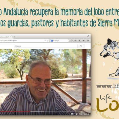 entrevistas para Life Lobo Andalucía